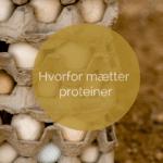 Hvorfor mætter proteiner?