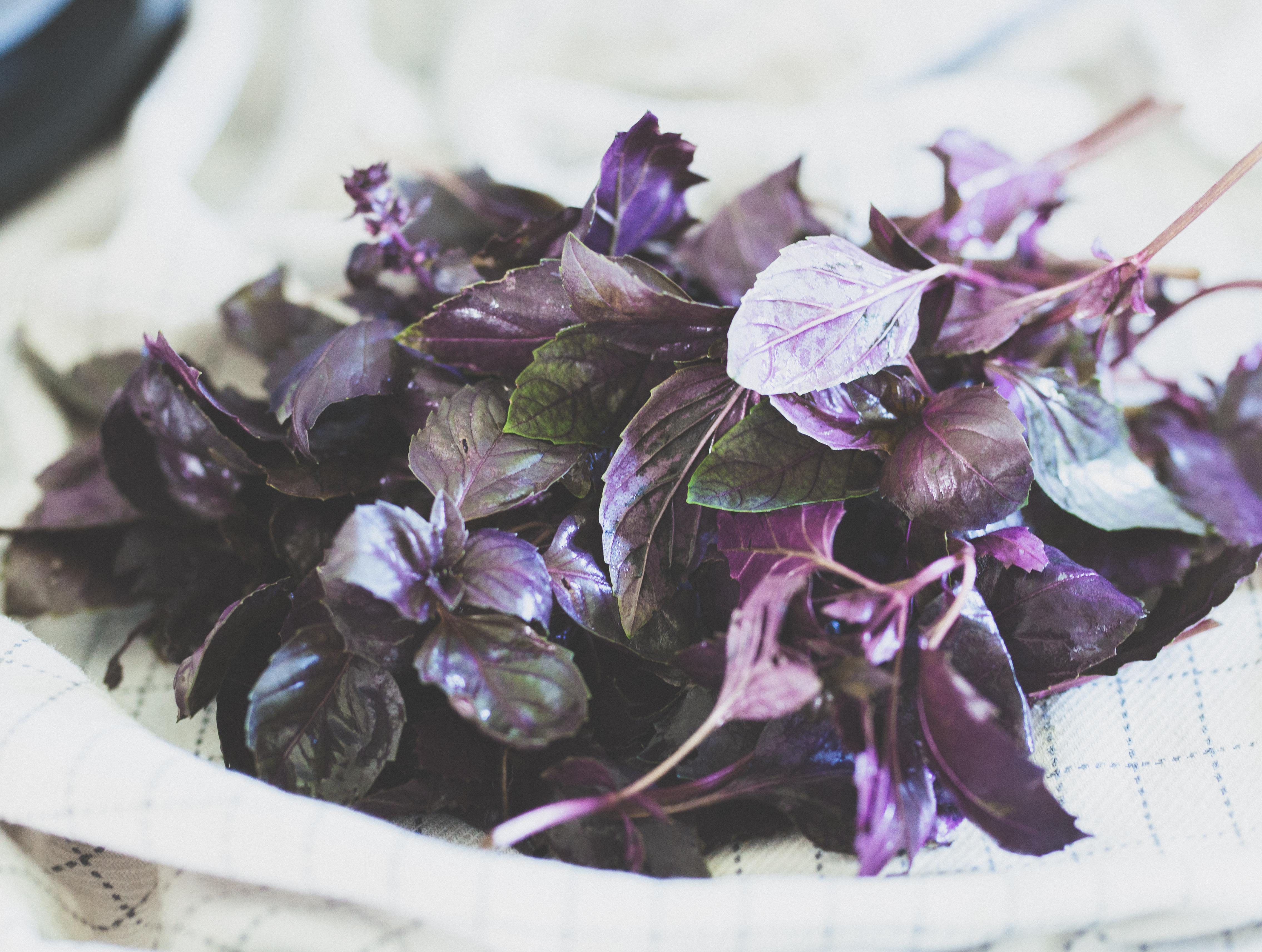 Tørre krydderurter, basilikum, mynte, estragon