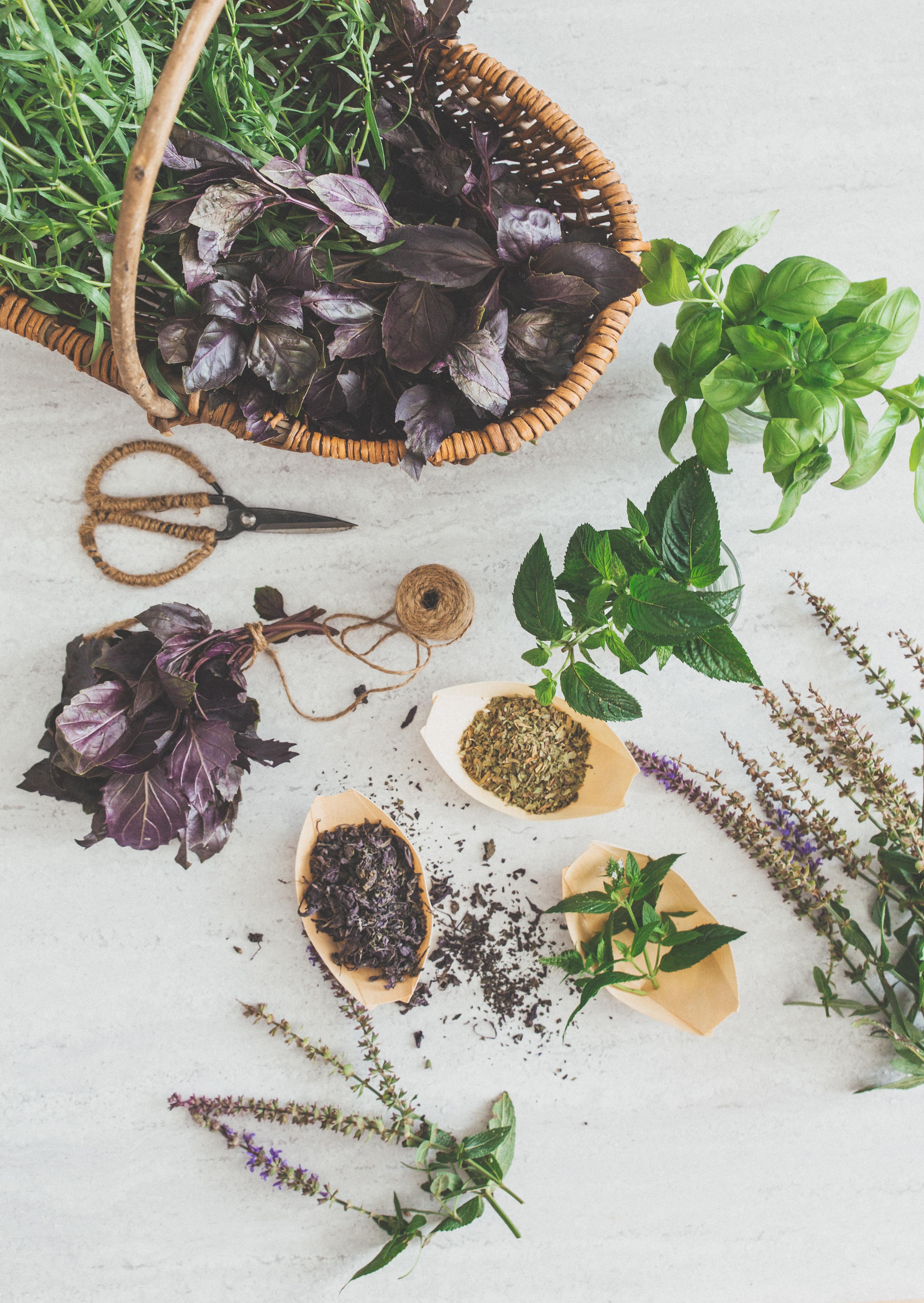 tørre krydderurter, basilikum, estragon og mynte